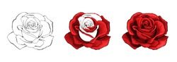 Rose hand drawing and colored to red with shadows. A blossoming rosebud. Vector element illustration.
