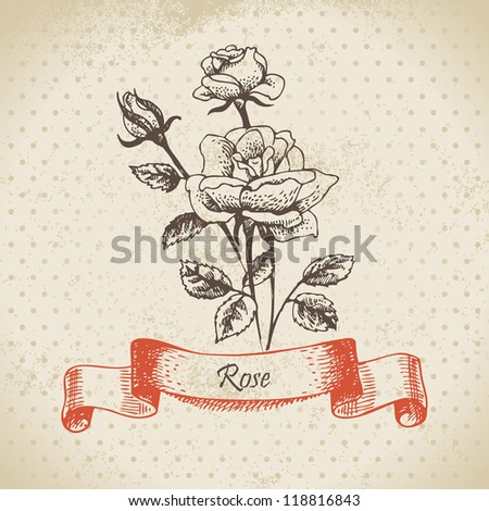 Rose. Hand drawn vintage design