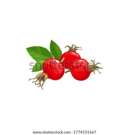 Rose hip fruits icon, berries food from farm garden and wild forest vector. Rosehip fruits, rose hip or hep haw ripe harvest for jam or juice package food ingredient, natural organic dessert berries Stock photo ©
