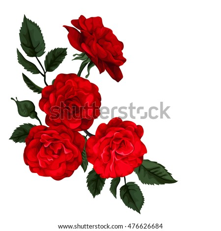 rose isolated on white perfect