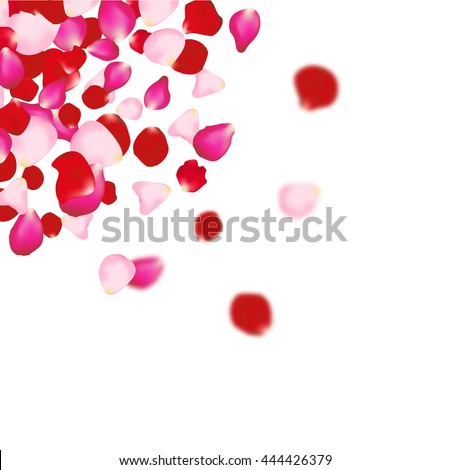 rose petals background for