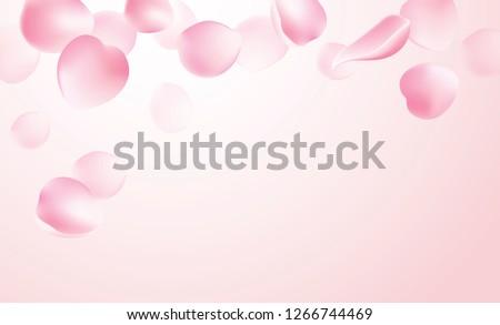 Rose petals falling on pink background vector illustration