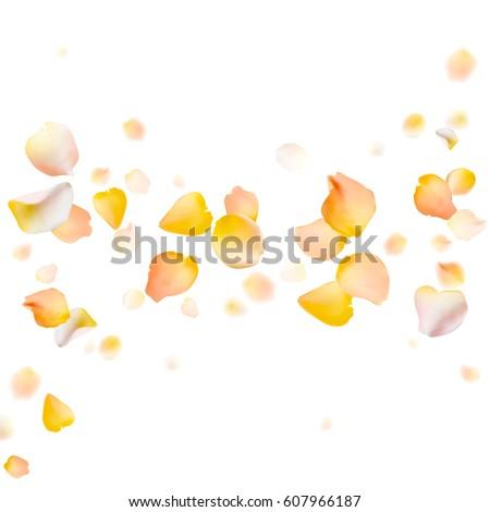 rose petals vector background