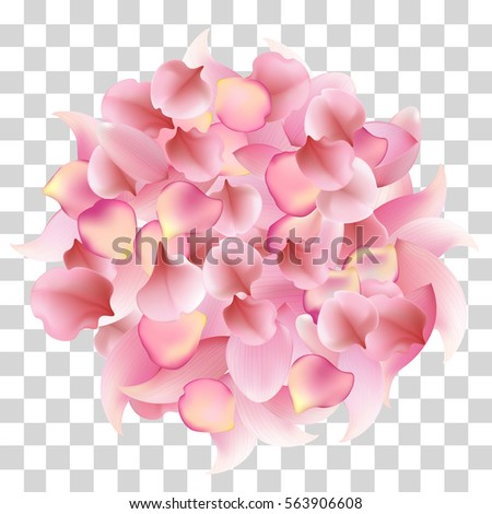 rose  sakura and lotus petals