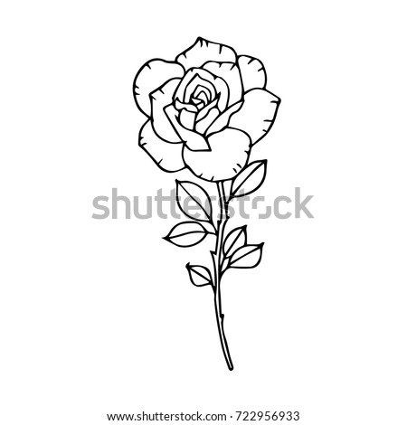 rose vector illustration