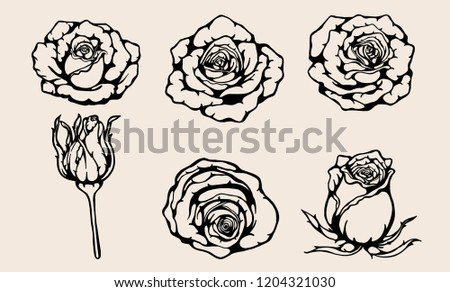 Rose vector set by hand drawing.Beautiful flower on brown background.Rose art highly detailed in line art style.Siluate rose for wallpaper or tattoo.