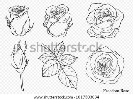rose vector set by hand drawing