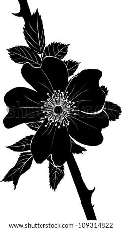 rosehip flower silhouette