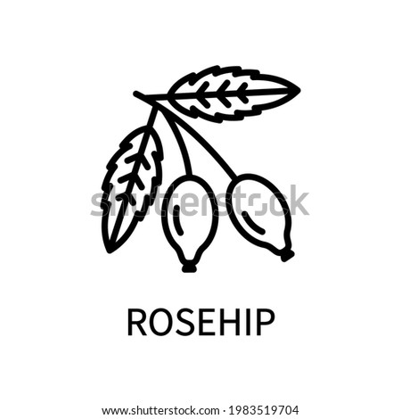 Rosehip Line Icon In Simple Style. Healthy Food. Natural Product. Vector sign in a simple style isolated on a white background Stock photo ©