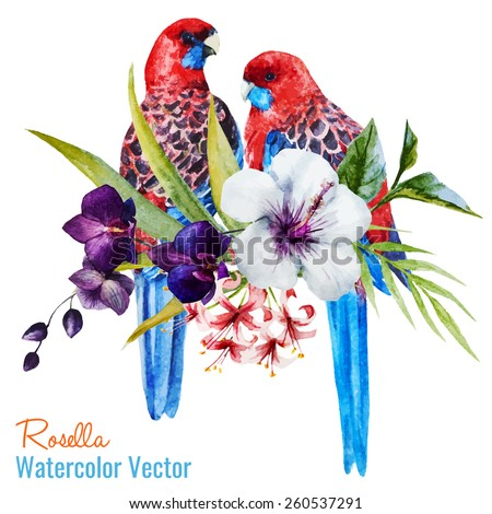 rosella  watercolor  parrot