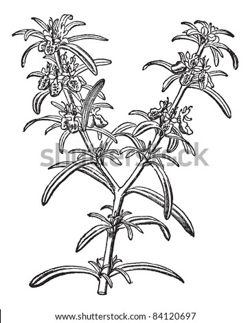 600083 besides Rose Coloring Pages For Kids also Ipomoea in addition What's Up 157 Chestnut Harvest  Rose Pruning  Potato Scab besides Perennials. on plant perennial flower garden