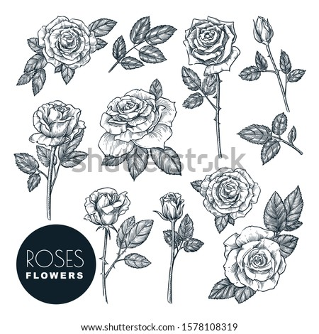 roses flowers set  vector