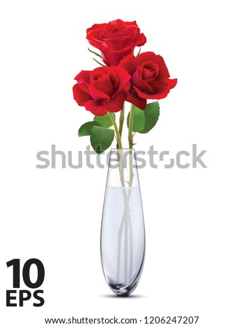roses in a glass vase  isolated