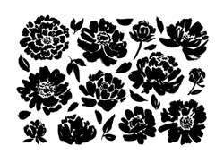 Roses, peonies, chrysanthemums hand drawn vector set. Black brush paint flower silhouettes with leaves. Floral drawings collection. Grunge dry paint brushstrokes isolated on white background.
