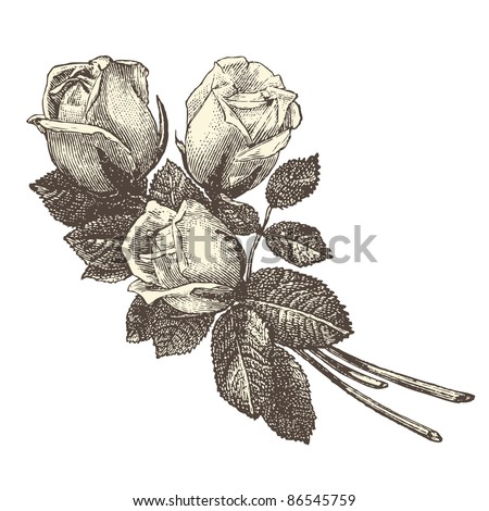 "Roses - vintage engraved illustration - ""La mode illustrée"" by Firmin-Didot et Cie in 1882 France"