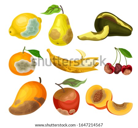 Rotten Fruits with Stinky Rot Covered the Skin Vector Set Foto stock ©