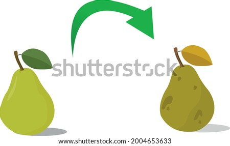 Rotten pear, vector flat illustration Foto stock ©