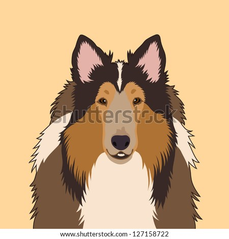 Rough Collie, The buddy dog