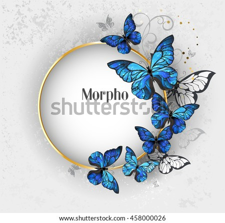 Round gold banner with blue butterflies morpho on gray textural background.