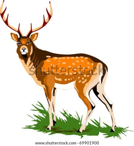 Royal deer on a green meadow (vector illustration);