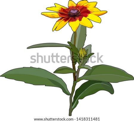 rudbeckia is a plant genus in