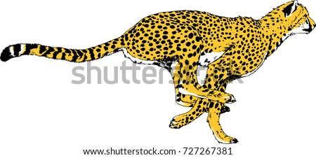 running Cheetah drawn in ink by hand on a white background logo