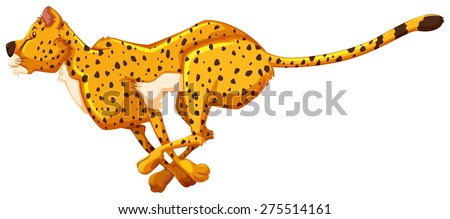 running cheetah on white