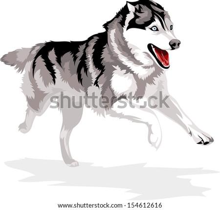 Siberian Husky Free Vector Art 25 Free Downloads