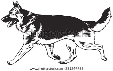 running dog  german shepherd