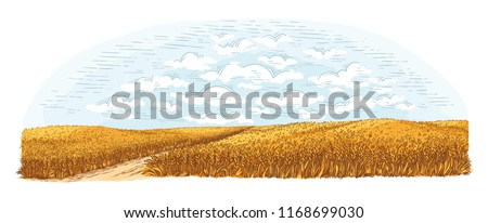 rural field with ripe wheat on