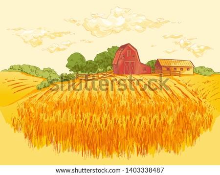 rural landscape field of wheat