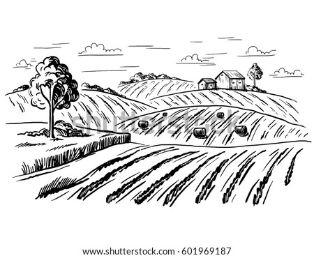 rural landscape field wheat in