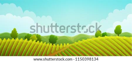 rural landscape of vineyard