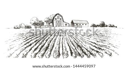 rural landscape ripening field