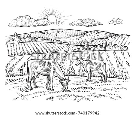 rural landscape with cows....