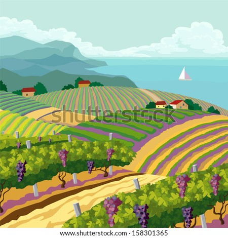 rural landscape with vineyard