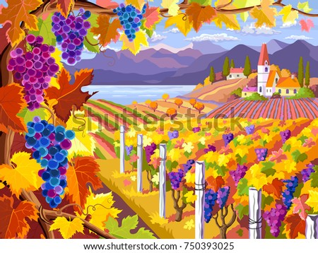 Rural landscape with vineyard, grapes bunches, fields and sea. Autumn rural landscape.