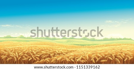 rural landscape with wheat