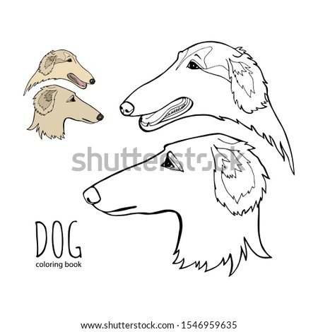 Russian borzoi. Hunting breed dogs. Coloring book page. Vector illustration. Vector logo pure-bred ストックフォト ©