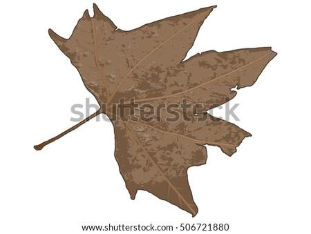rustic autumn maple leaf vector