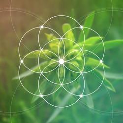 Sacred geometry. Mathematics, nature, and spirituality in nature. Fibonacci row. The formula of nature. The Eternity symbol and interlocking geometric shapes.