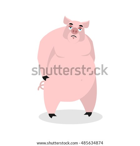 sad pig big fat boar