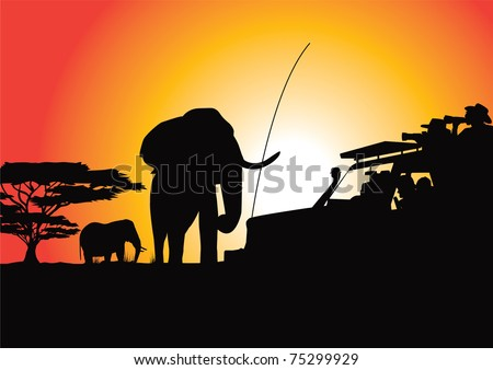safari sunset photoshoot vector