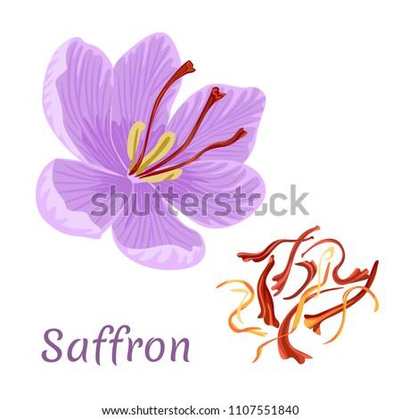 saffron flower isolated on