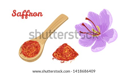 Saffron set. Dried spice saffron threads in wooden spoon and flower isolated on white background. Vector illustration of seasoning in cartoon flat style.