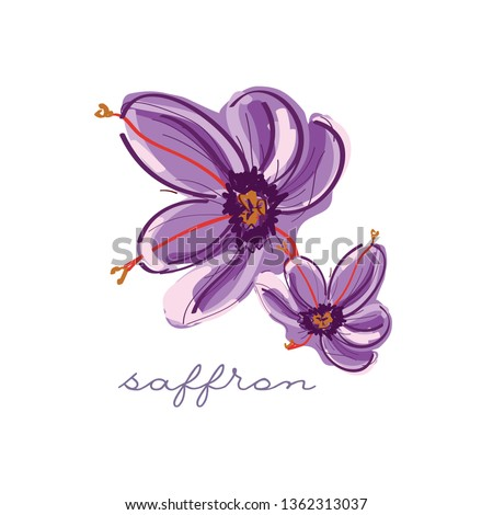 Saffron vector bright icon isolated on background with text. Hand drawn saffron. For infographic, website or app