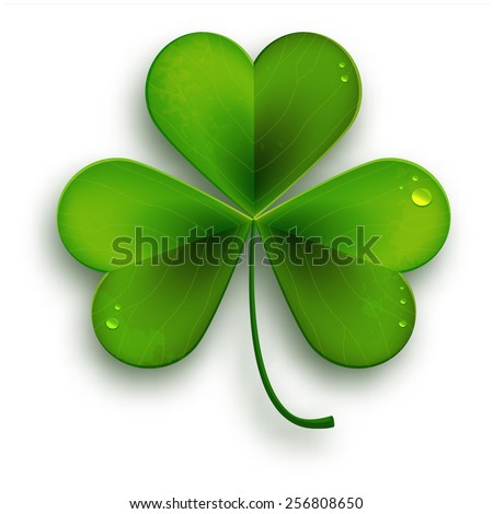 Saint Patricks Day symbol, vector realistic shamrock leafsolated on white