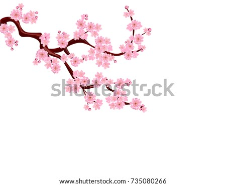 Sakura. A curved branch with delicate flowers and cherry buds. isolated without grid and gradient. vector illustration