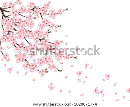 Sakura. A lush cherry branch with pink flowers in the wind loses petals. Isolated on a pink background. Vector illustration