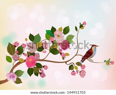 sakura  bird  spring  postcard
